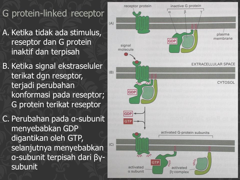 G protein-linked receptor