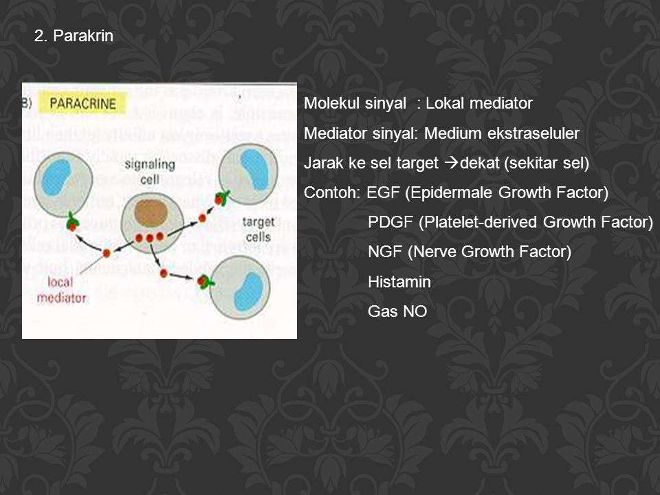 2. Parakrin Molekul sinyal : Lokal mediator. Mediator sinyal: Medium ekstraseluler. Jarak ke sel target dekat (sekitar sel)