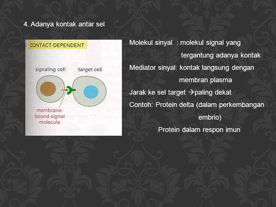 4. Adanya kontak antar sel