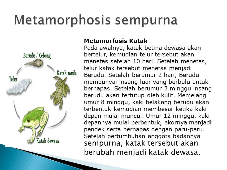 Metamorphosis sempurna