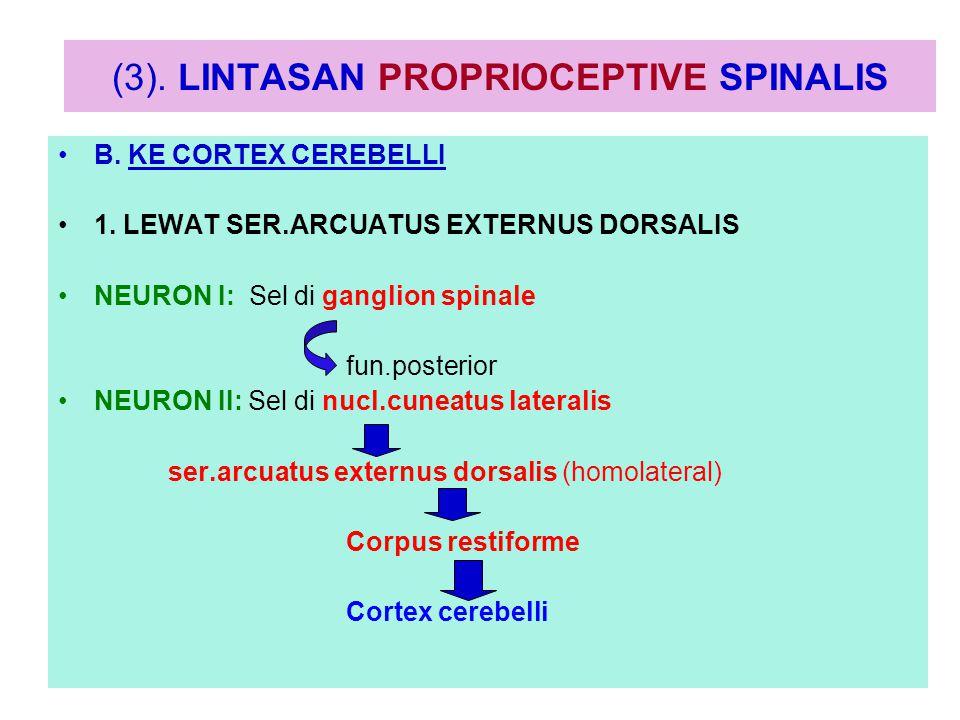 (3). LINTASAN PROPRIOCEPTIVE SPINALIS