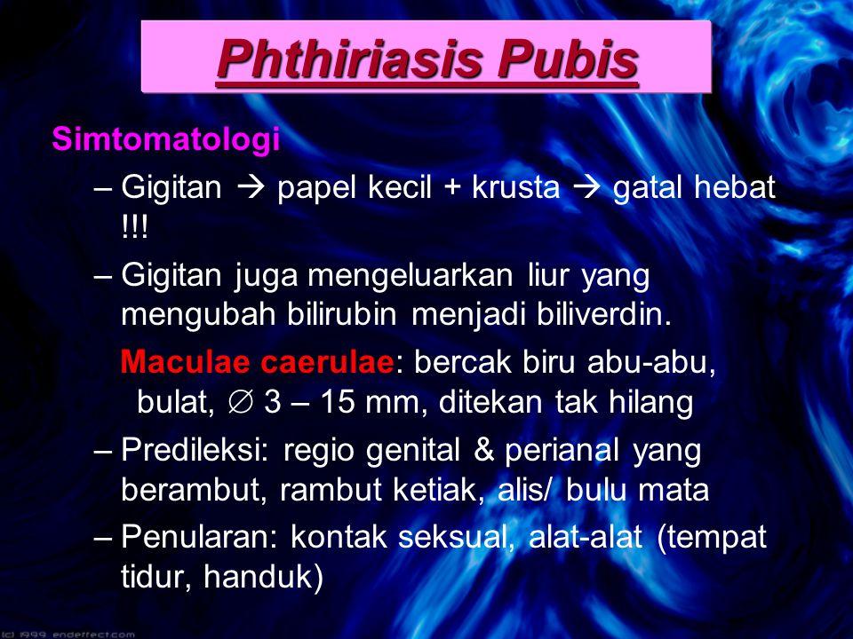 Phthiriasis Pubis Simtomatologi
