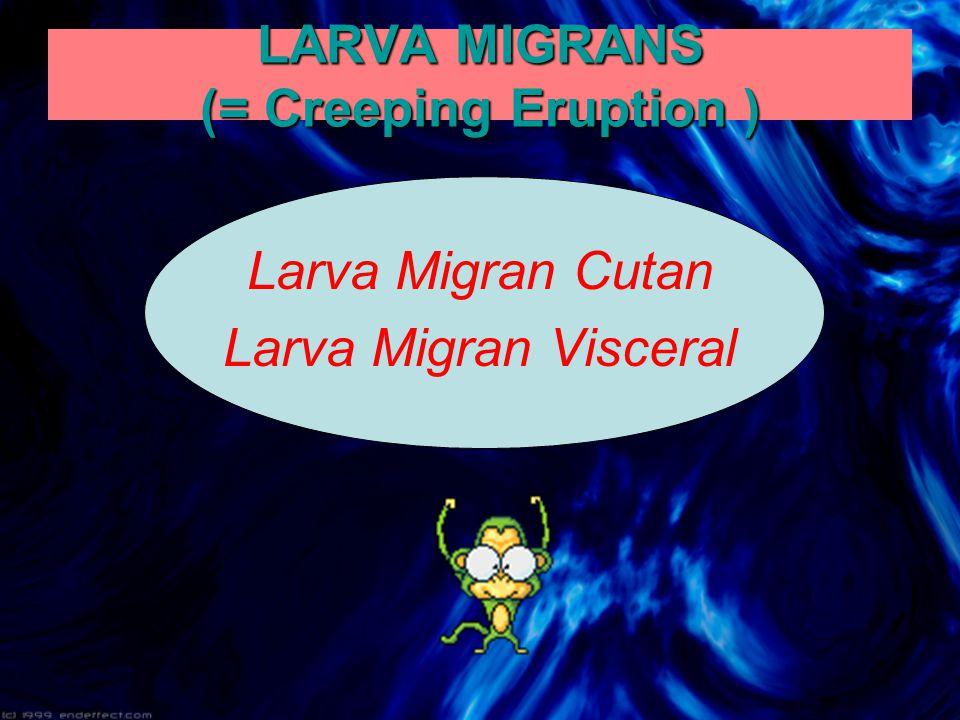 LARVA MIGRANS (= Creeping Eruption )