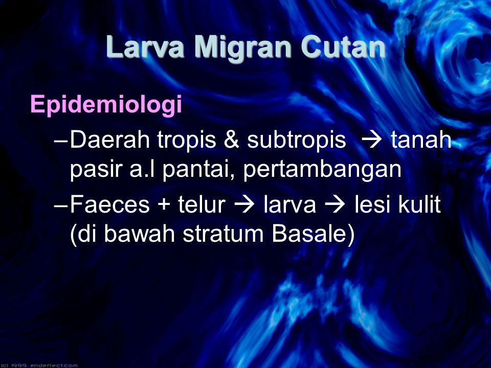 Larva Migran Cutan Epidemiologi