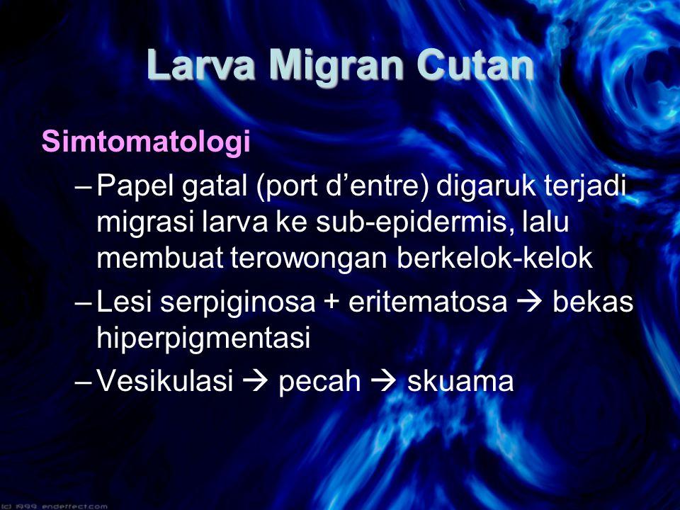 Larva Migran Cutan Simtomatologi
