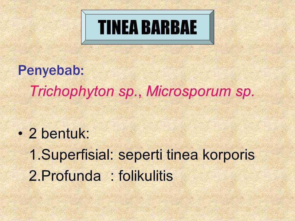 TINEA BARBAE Penyebab: Trichophyton sp., Microsporum sp. 2 bentuk: