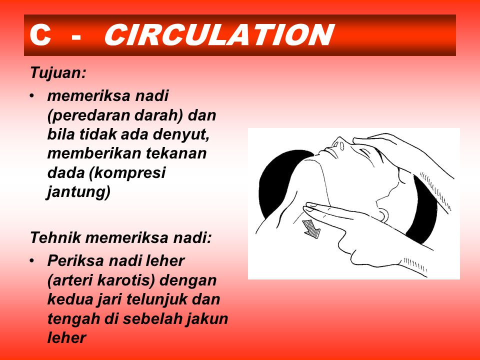 C - CIRCULATION Tujuan: