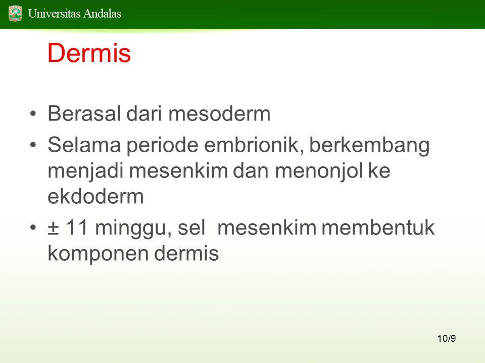Dermis Berasal dari mesoderm
