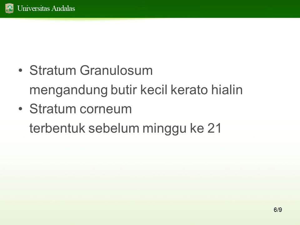 Stratum Granulosum mengandung butir kecil kerato hialin.