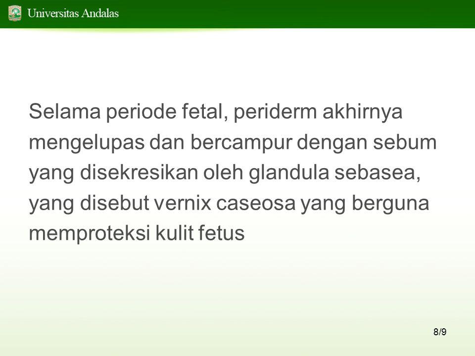 Selama periode fetal, periderm akhirnya
