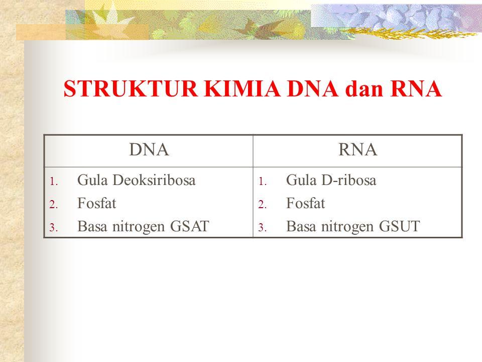 STRUKTUR KIMIA DNA dan RNA