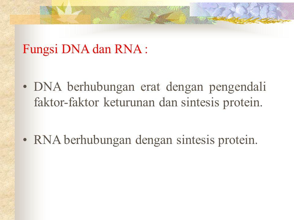 Fungsi DNA dan RNA : DNA berhubungan erat dengan pengendali faktor-faktor keturunan dan sintesis protein.