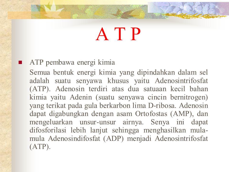A T P ATP pembawa energi kimia