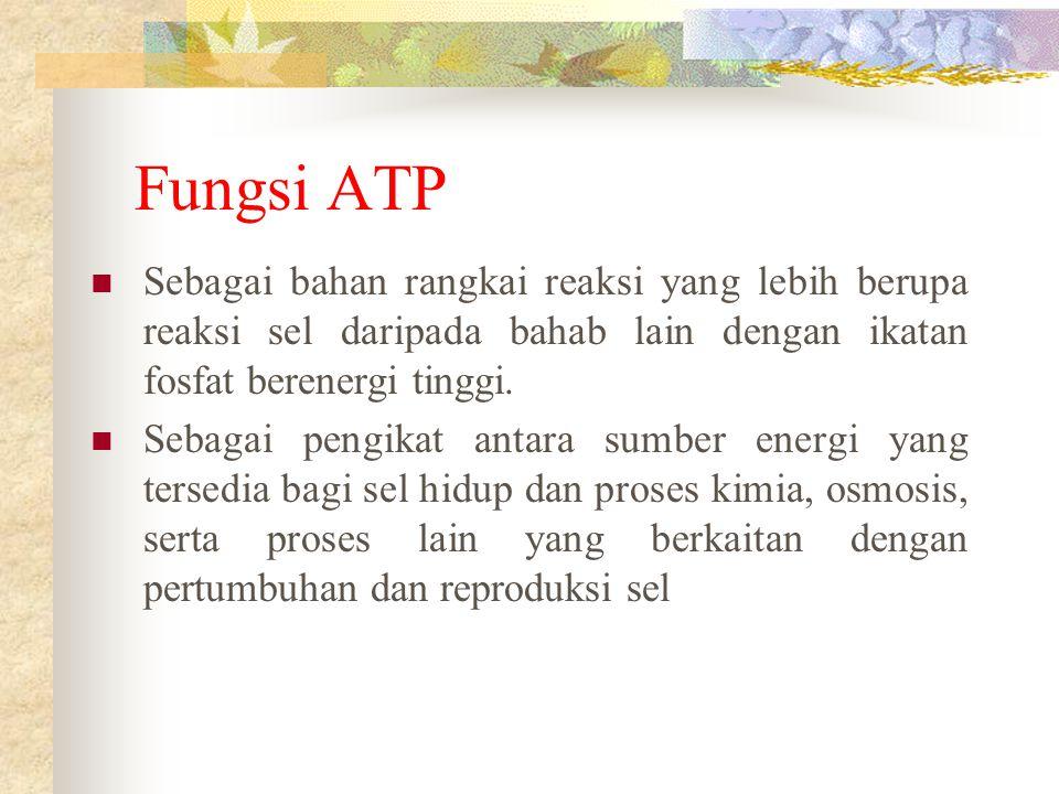 Fungsi ATP Sebagai bahan rangkai reaksi yang lebih berupa reaksi sel daripada bahab lain dengan ikatan fosfat berenergi tinggi.