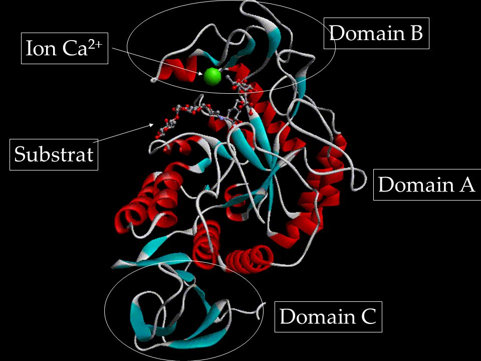 Domain B Ion Ca2+ Substrat Domain A Domain C
