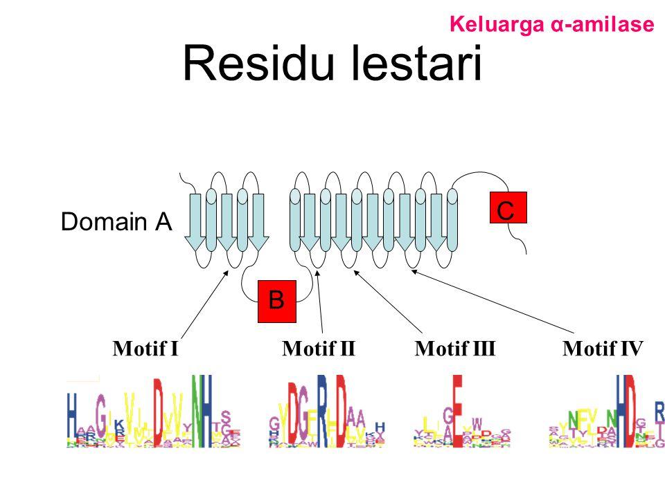 Residu lestari C Domain A B Keluarga α-amilase Motif I Motif II