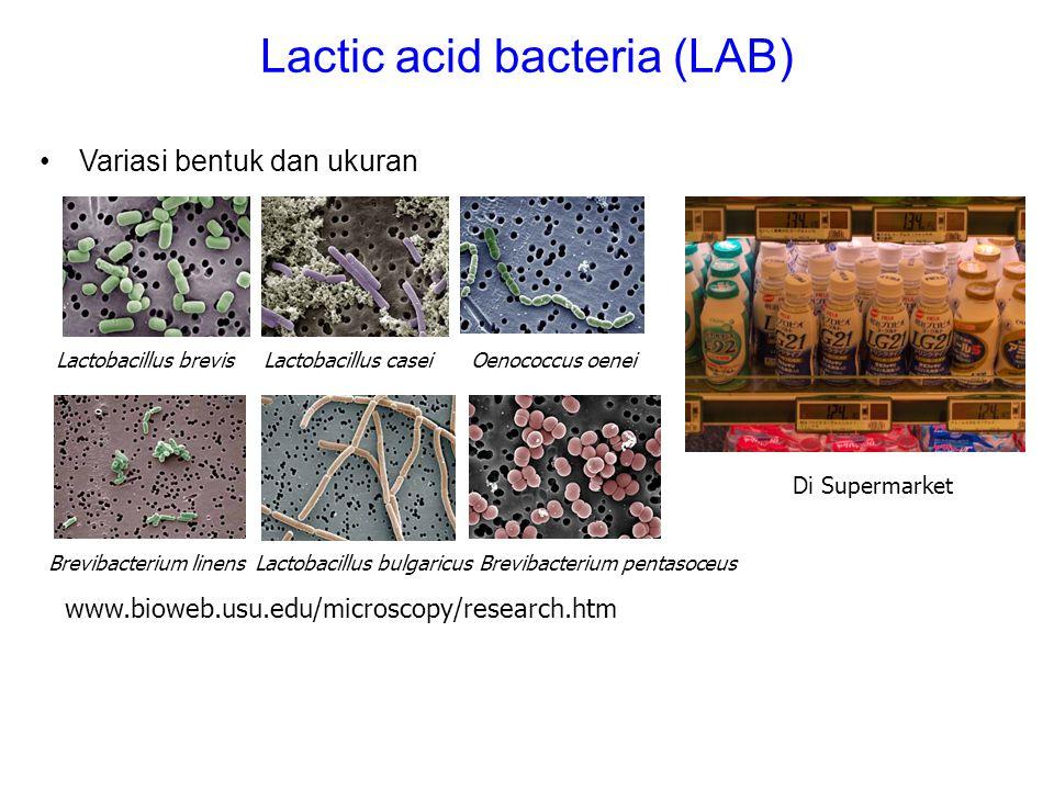Lactic acid bacteria (LAB)