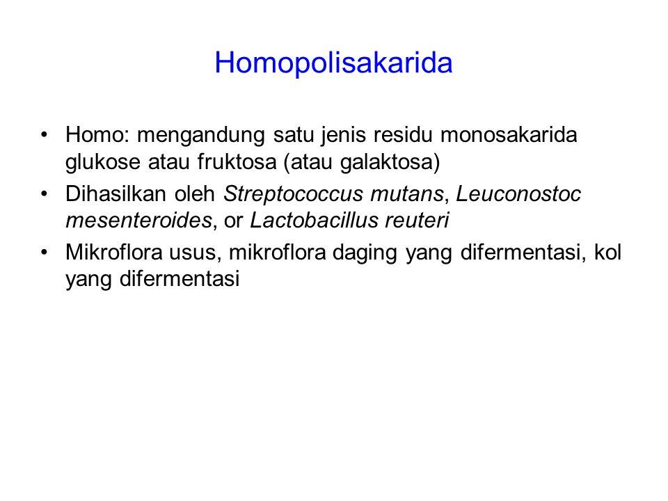 Homopolisakarida Homo: mengandung satu jenis residu monosakarida glukose atau fruktosa (atau galaktosa)