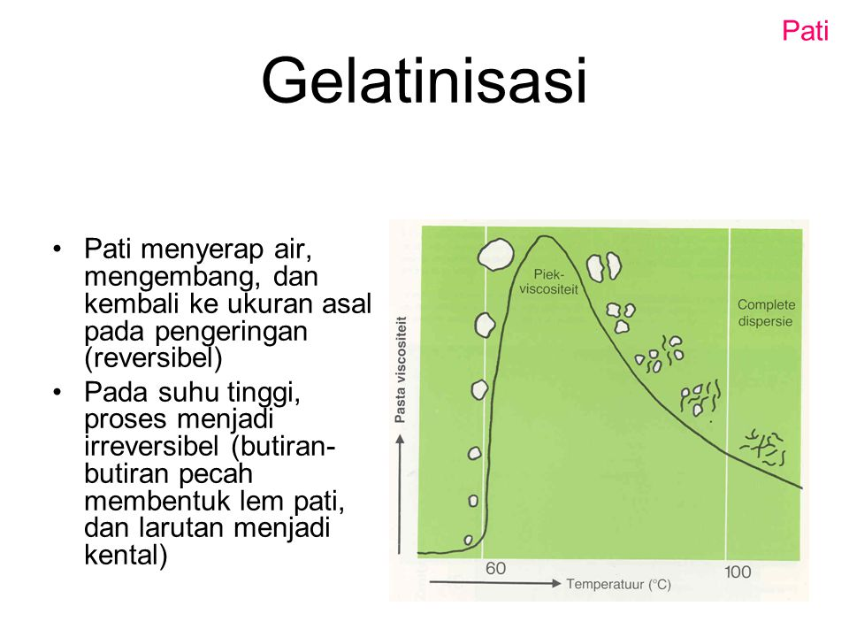 Pati Gelatinisasi. Pati menyerap air, mengembang, dan kembali ke ukuran asal pada pengeringan (reversibel)