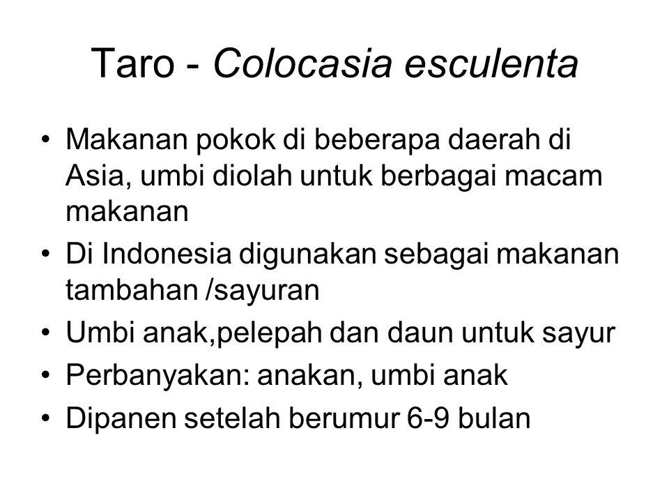 Taro - Colocasia esculenta