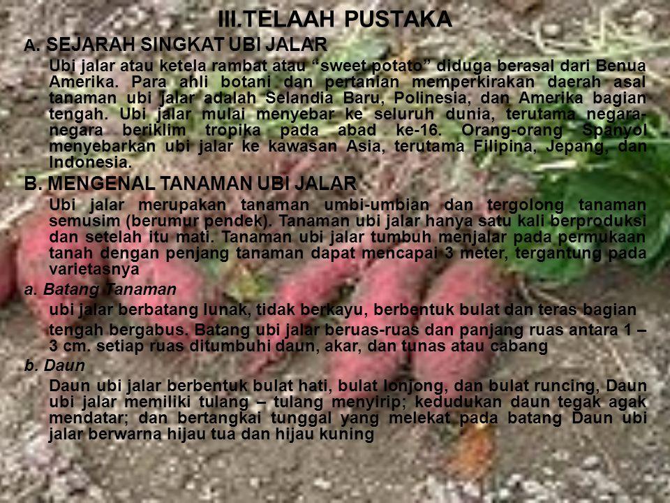 III.TELAAH PUSTAKA B. MENGENAL TANAMAN UBI JALAR
