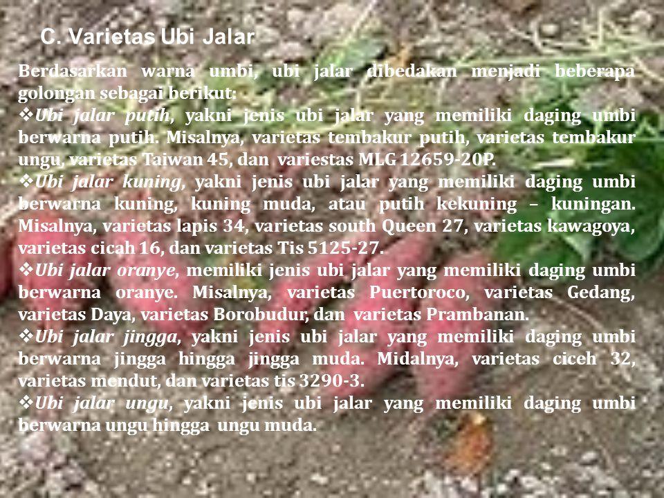 C. Varietas Ubi Jalar Berdasarkan warna umbi, ubi jalar dibedakan menjadi beberapa golongan sebagai berikut: