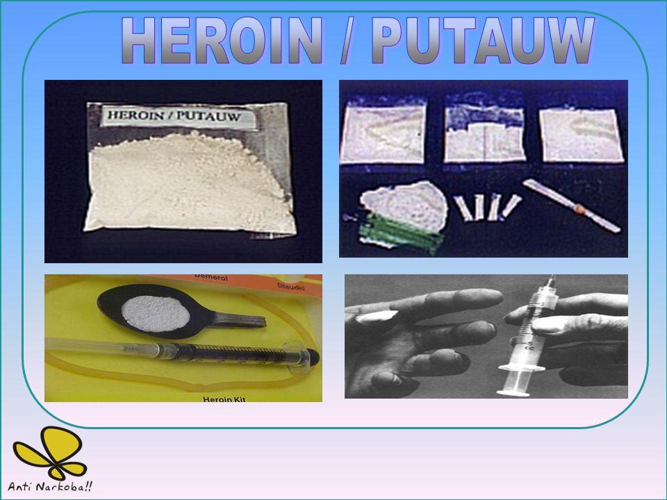 HEROIN / PUTAUW BADAN NARKOTIKA NASIONAL PROVINSI LAMPUNG