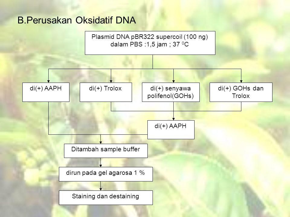 B.Perusakan Oksidatif DNA