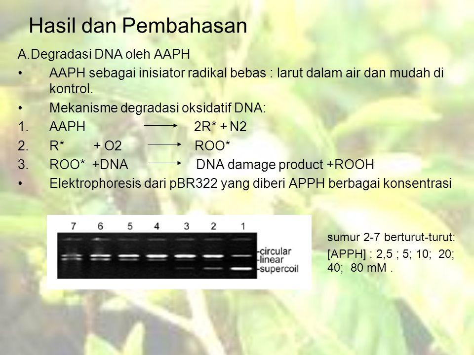 Hasil dan Pembahasan A.Degradasi DNA oleh AAPH