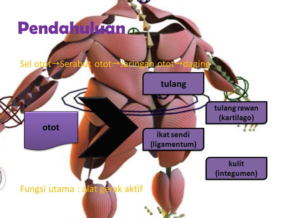 tulang rawan (kartilago) ikat sendi (ligamentum)