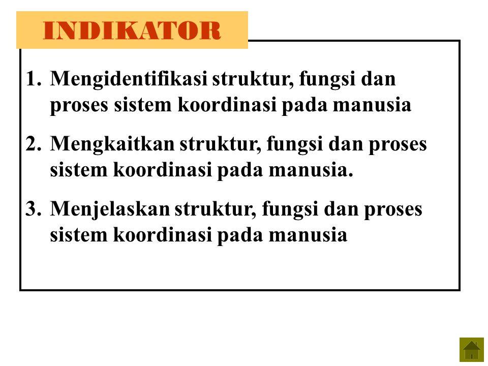 INDIKATOR Mengidentifikasi struktur, fungsi dan proses sistem koordinasi pada manusia.