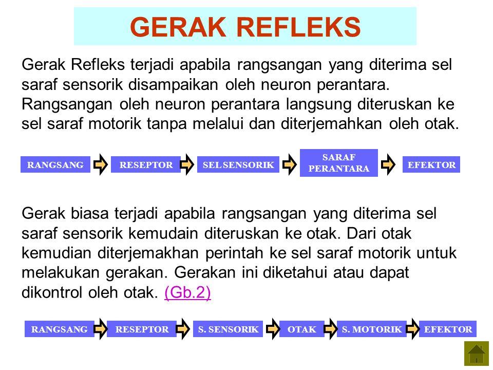 GERAK REFLEKS