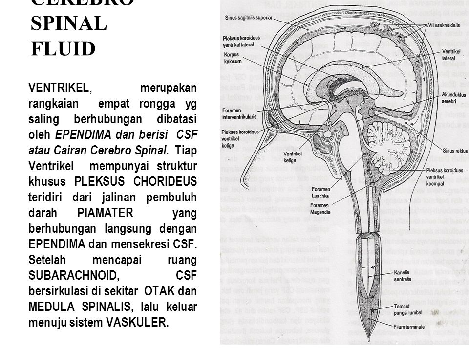 CEREBRO SPINAL FLUID