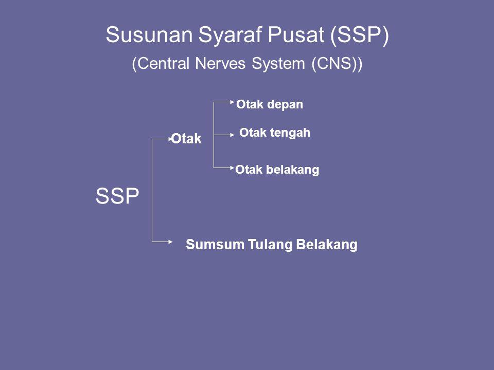 Susunan Syaraf Pusat (SSP) (Central Nerves System (CNS))