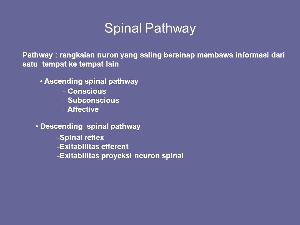 Spinal Pathway Pathway : rangkaian nuron yang saling bersinap membawa informasi dari satu tempat ke tempat lain.