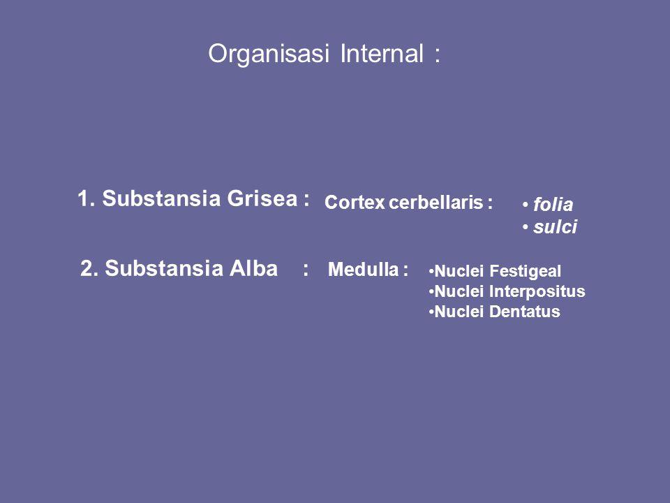 Organisasi Internal : Substansia Grisea : 2. Substansia Alba :