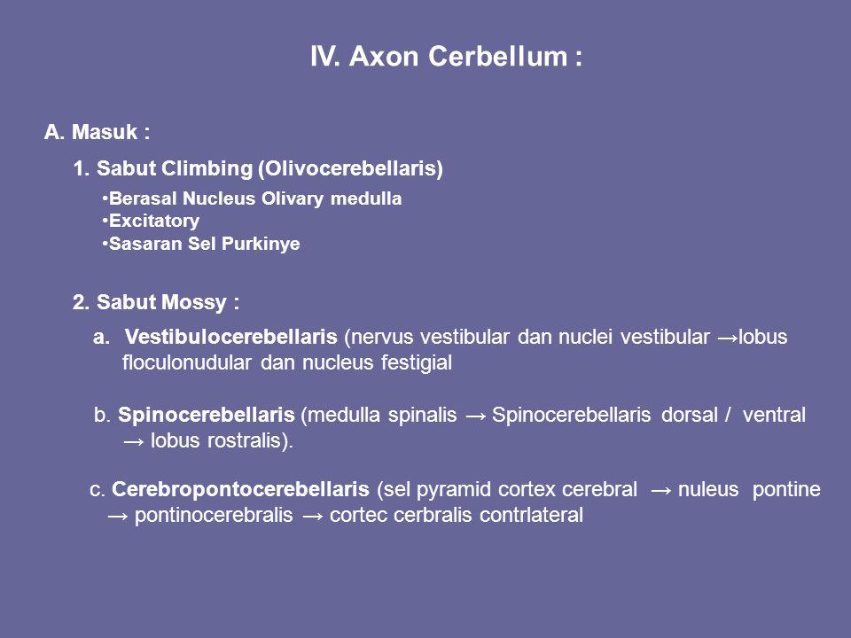 IV. Axon Cerbellum : A. Masuk : 1. Sabut Climbing (Olivocerebellaris)