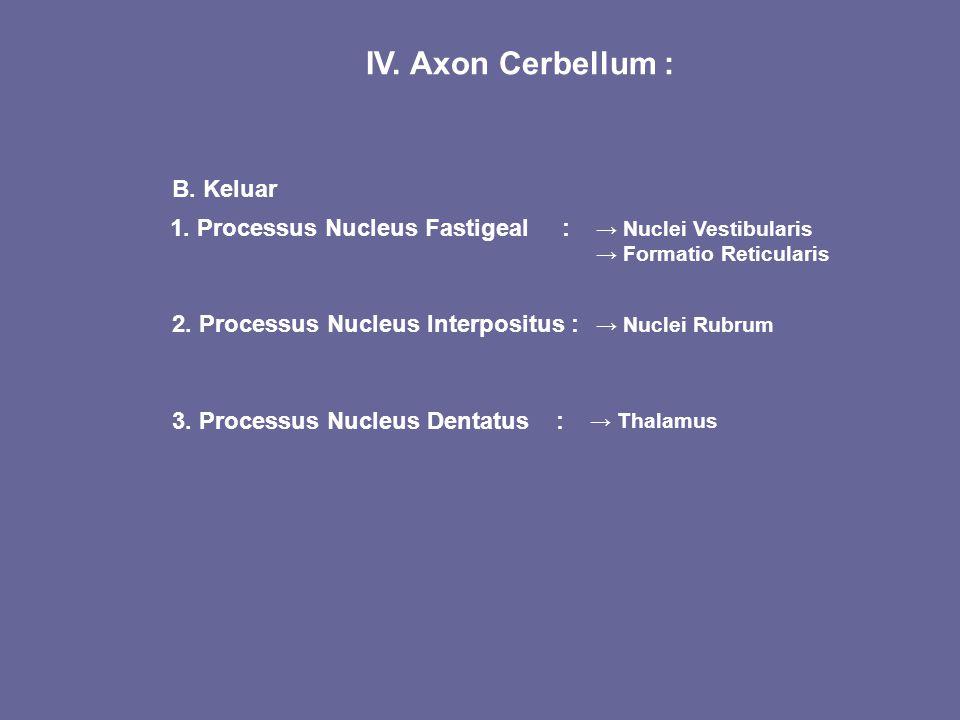 IV. Axon Cerbellum : B. Keluar 1. Processus Nucleus Fastigeal :