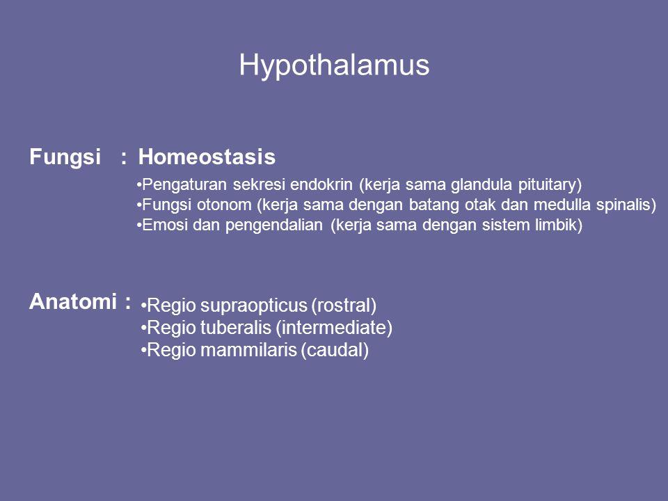 Hypothalamus Fungsi : Homeostasis Anatomi :