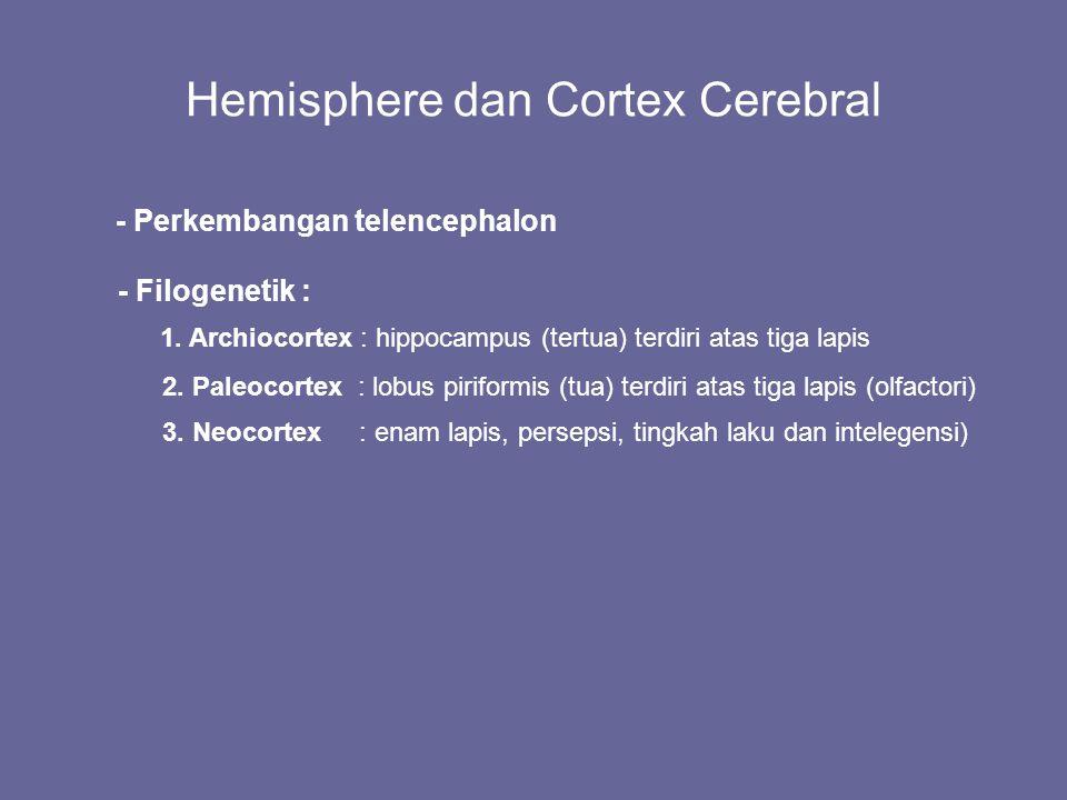 Hemisphere dan Cortex Cerebral