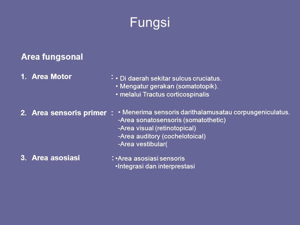 Fungsi Area fungsonal Area Motor : Area sensoris primer :