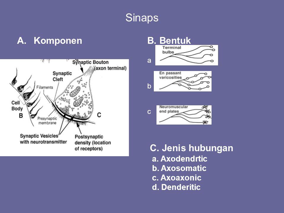 Sinaps Komponen B. Bentuk C. Jenis hubungan a. Axodendrtic