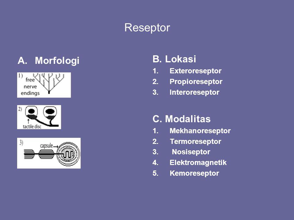 Reseptor Morfologi B. Lokasi C. Modalitas Exteroreseptor