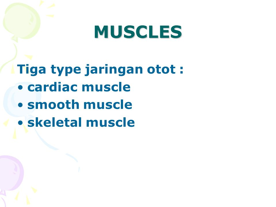 MUSCLES Tiga type jaringan otot : cardiac muscle smooth muscle