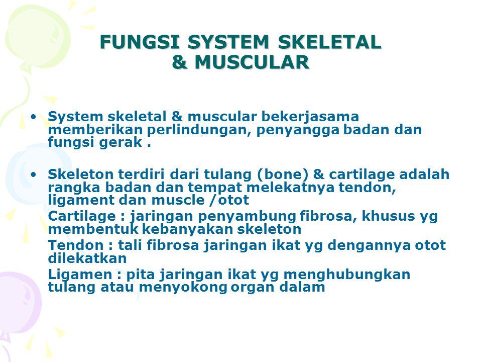 FUNGSI SYSTEM SKELETAL & MUSCULAR