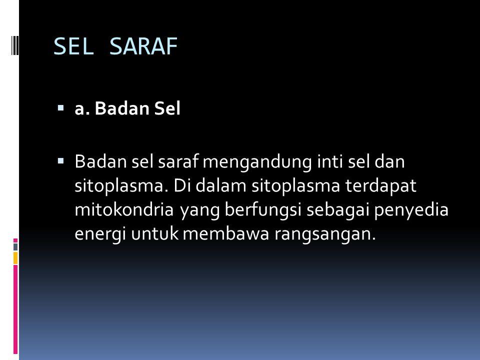 SEL SARAF a. Badan Sel.