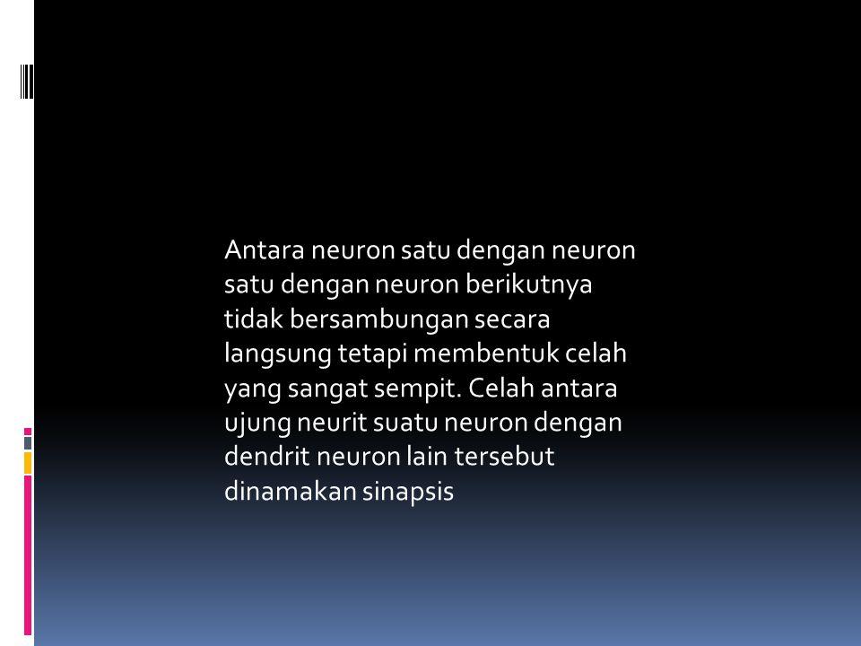 Antara neuron satu dengan neuron satu dengan neuron berikutnya tidak bersambungan secara langsung tetapi membentuk celah yang sangat sempit.