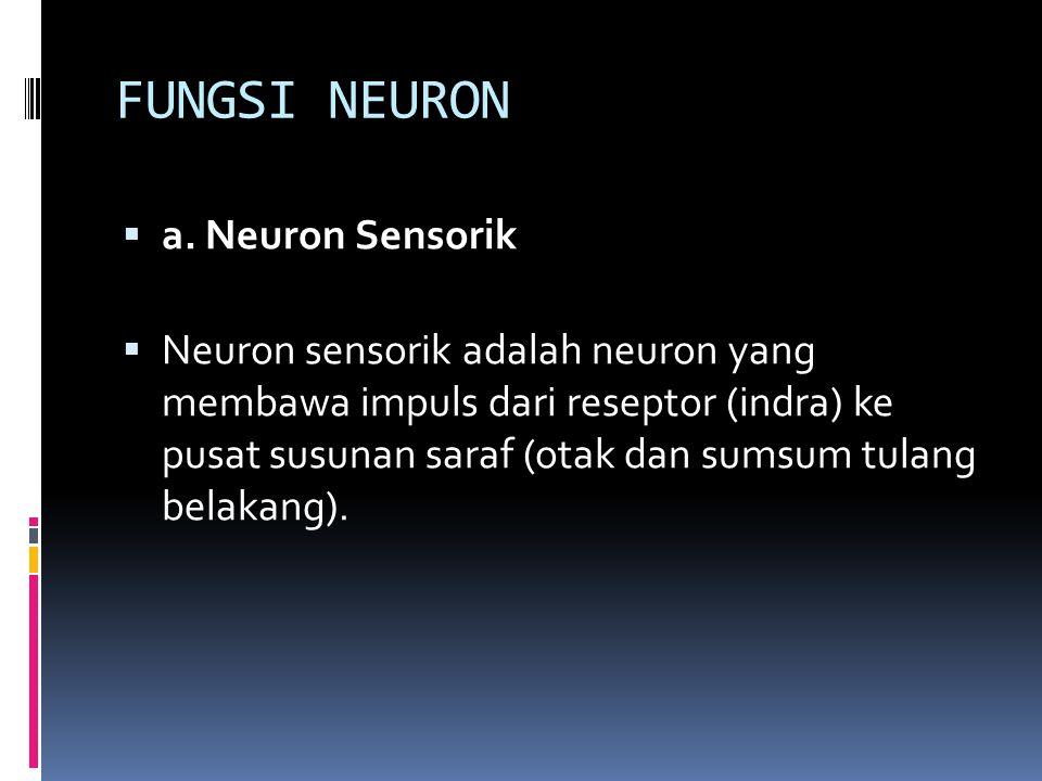 FUNGSI NEURON a. Neuron Sensorik