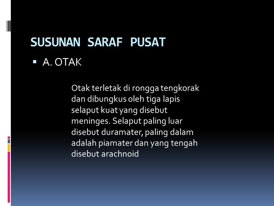 SUSUNAN SARAF PUSAT A. OTAK