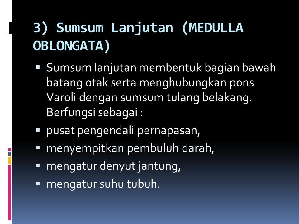 3) Sumsum Lanjutan (MEDULLA OBLONGATA)